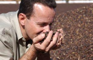 caffè coltivazione chicchi